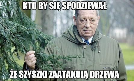 """""""Polska w trocinach"""". Internauci reagują na rzeź drzew"""