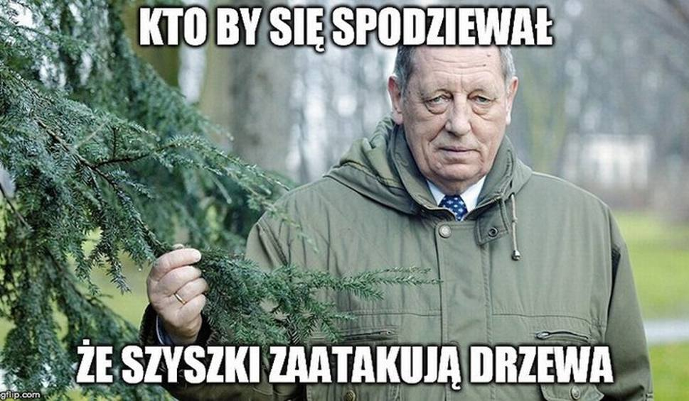 """Film do artykułu: """"Polska w trocinach"""". Internauci reagują na rzeź drzew"""