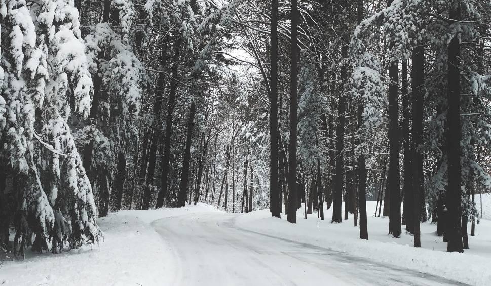 Film do artykułu: Zgubił się na mrozie w lesie w powiecie włodawskim. 22-latkowi z gminy Hanna pomogli policjanci