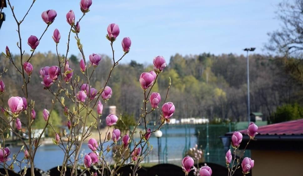 Film do artykułu: LUBUSKIE. Łagów Lubuski jest piękny o każdej porze roku. To świetne miejsce na wycieczki krótkie i długie
