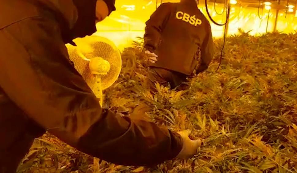 Film do artykułu: Oskarżeni za tysiące krzaków marihuany na Kaszubach. Wielka plantacja i kilogramy narkotyków [zdjęcia]