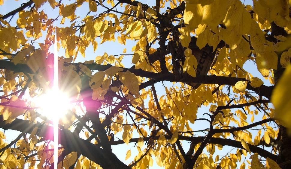 Film do artykułu: W sobotę na Podkarpaciu padł pogodowy rekord. Tak ciepło w listopadzie nie było w Polsce jeszcze nigdy!