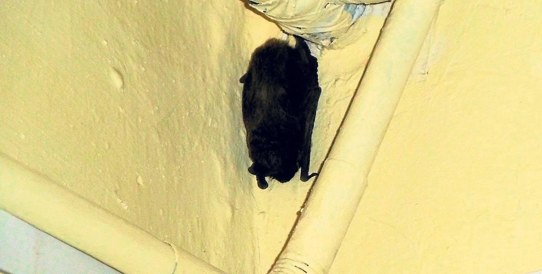Nietoperze zagnieździły się w jednym z wieżowców przy ul. Sportowej
