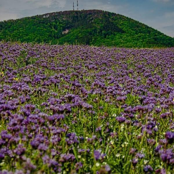 Magiczna łąka na Dolnym Śląsku. Ależ pięknie!