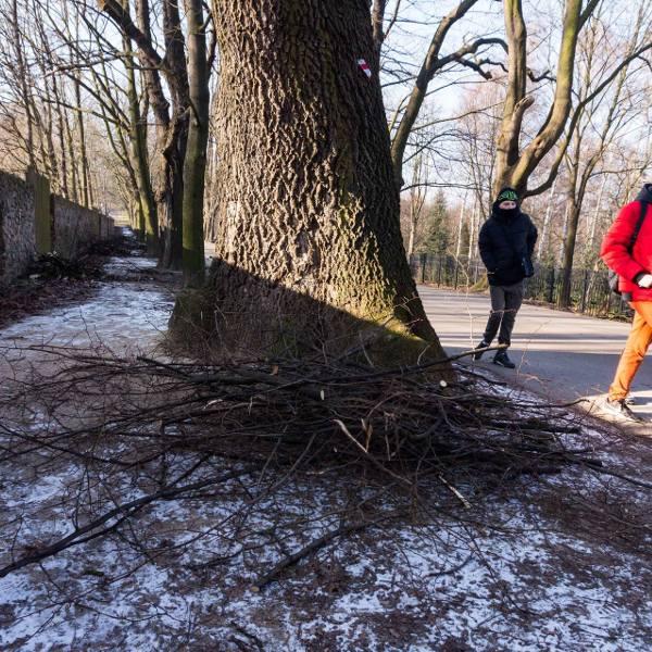 """""""Koszmarny widok"""". Krakowianie oburzeni wycinką drzew w al. Waszyngtona [ZDJĘCIA]"""