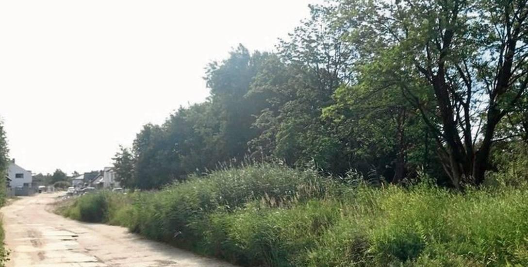 Sporny grunt (po prawej) na razie jest zarośnięty chaszczami