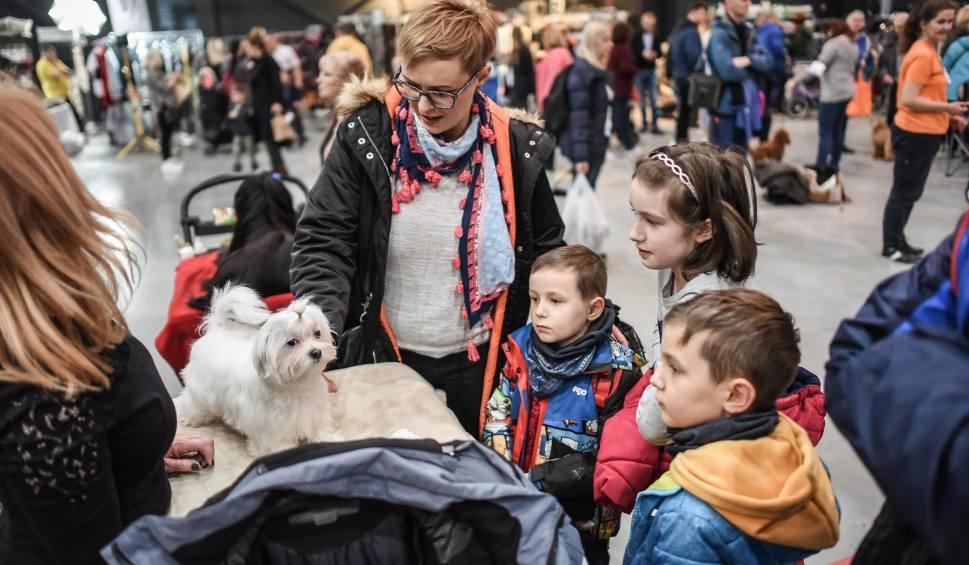 Film do artykułu: Wystawa psów w Bydgoszczy. Zwierzę ugryzło 8-latka