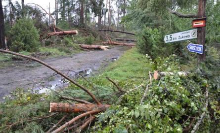Nawałnica zniszczyła hektary lasów w okolicach Suszka