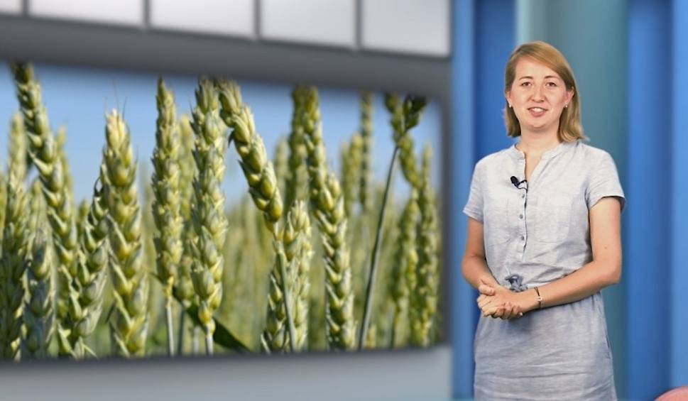 Film do artykułu: Agro Pomorska odcinek 66: jadalne bobry, jubileusz ARiMR i Dni Pola [wideo]