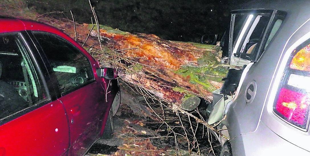 Jedynie jedna osoba kierująca samochodem ucierpiała z powodu łamiących się drzew