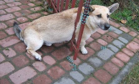 Ul. Skrzetuskiego. Pies utknął w bramie (zdjęcia)
