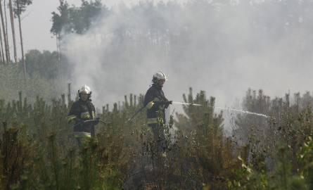 W 2015 roku Patryk G. zaczął podkładać ogień w lasach w okolicach Bukowna.