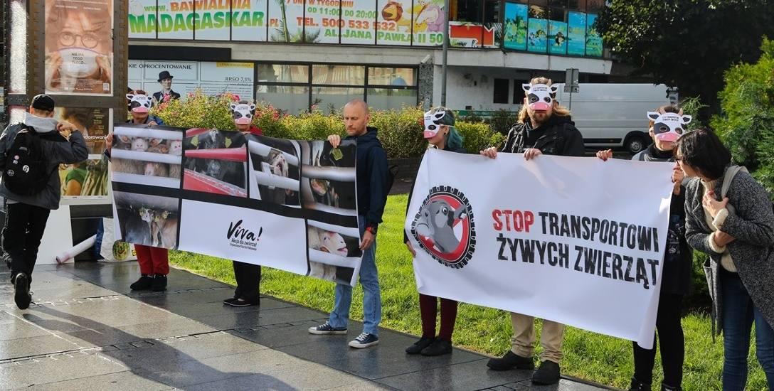 Protesty w całym kraju. Koszmarna prawda o transporcie żywych zwierząt