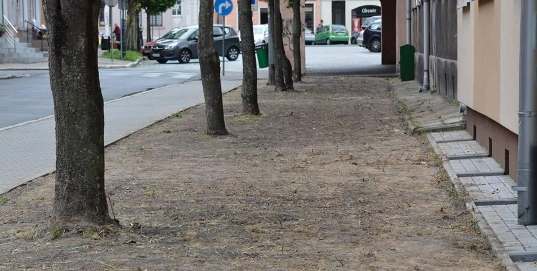 W Sulechowie zostały wysiane łąki kwietne. Coraz więcej miejscowości je zakłada zamiast trawników