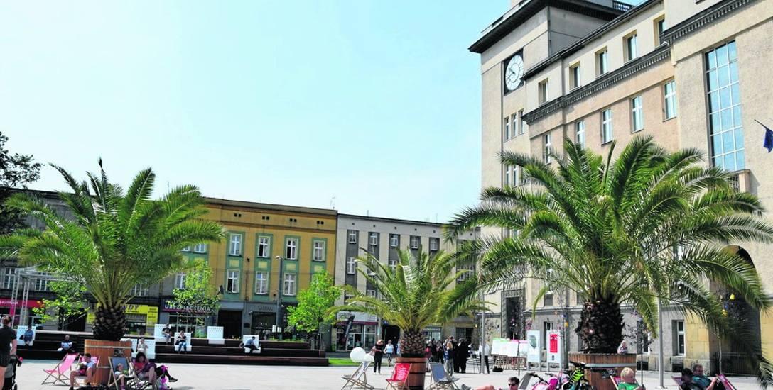 Na płycie chorzowskiego rynku stoją już trzy palmy. Egzotyczne rośliny są własnością miasta