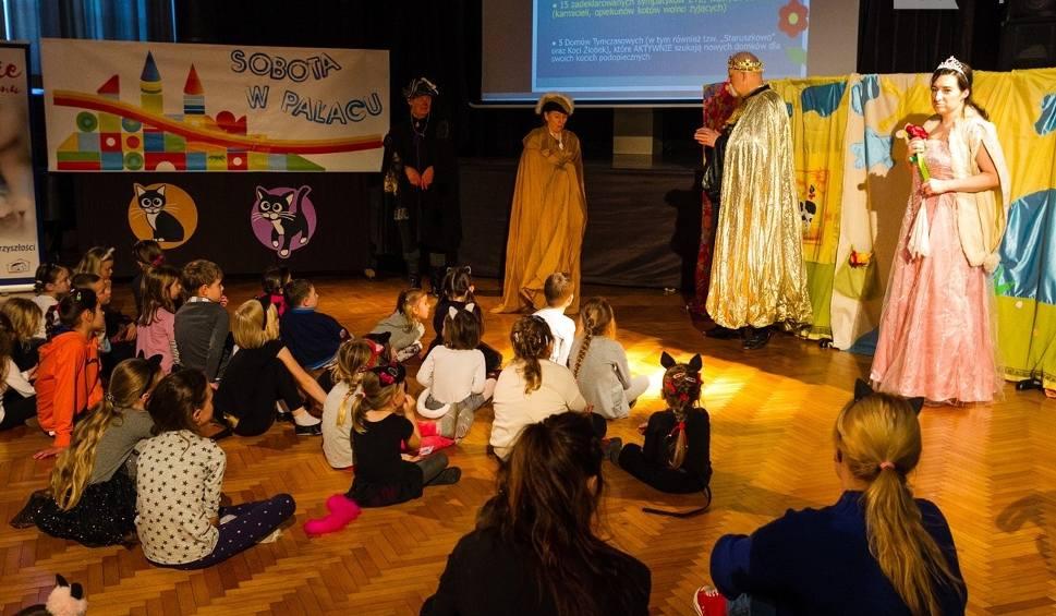Film do artykułu: Międzynarodowy Dzień Kota w pałacu Młodzieży w Szczecinie [ZDJĘCIA, WIDEO]
