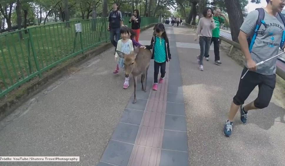 Film do artykułu: Jeleń, który udaje przewodnika [wideo]