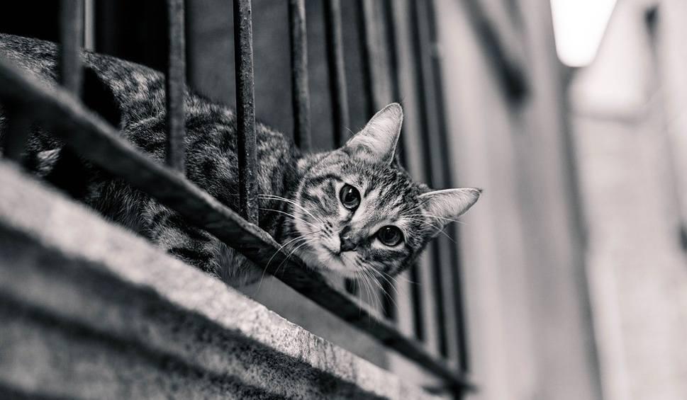 Výsledok vyhľadávania obrázkov pre dopyt black and white photography cats
