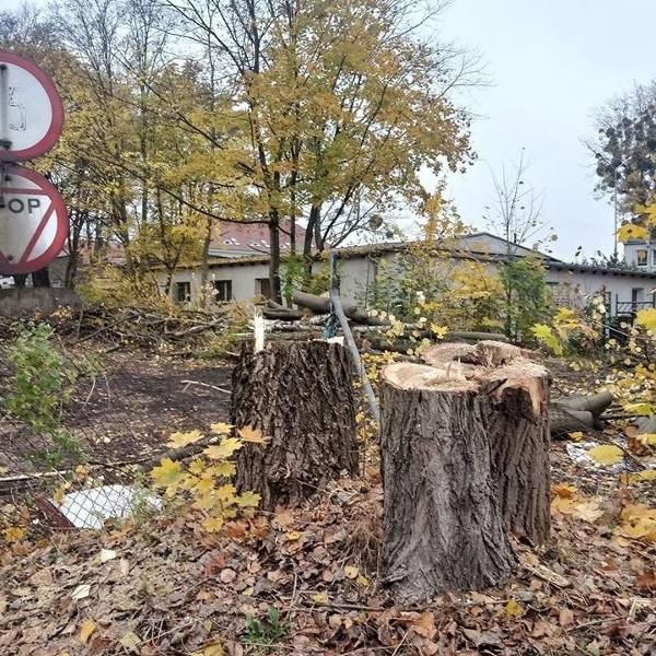 Budowa szpitala na Grunwaldzie: Trwa wycinka drzew i wyburzanie baraków. Ekolodzy protestują