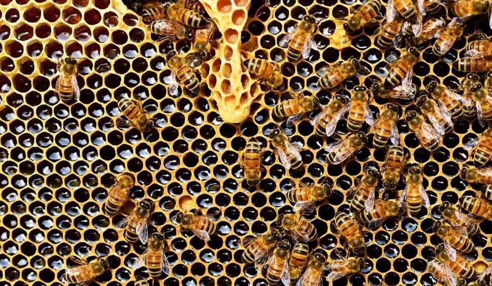 Film do artykułu: Pszczele stołówki, domki. Tak dbaliśmy o pszczoły w 2018 roku