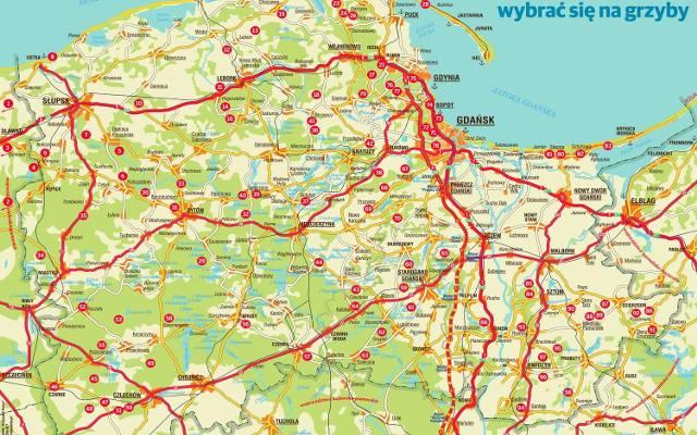 Mapa Grzyby Pomorze Dziennikbaltycki Pl