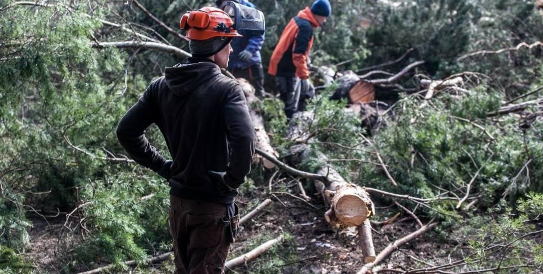 Leśnicy boją się, że jeśli ustawa wejdzie w życie, pod topór będzie mogło pójść tysiące hektarów lasów w całej Polsce.