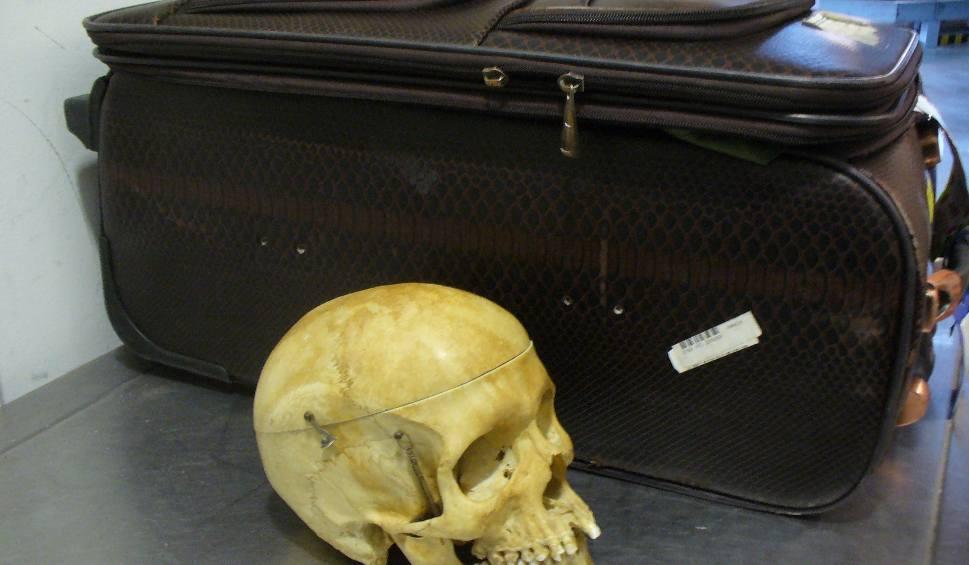 Film do artykułu: Ludzka czaszka w bagażu na lotnisku w Goleniowie!