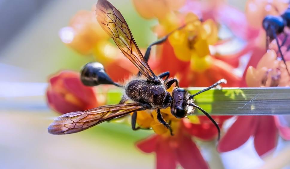 Film do artykułu: Latające mrówki. Czy są dla nas groźne? Jak się ich pozbyć?