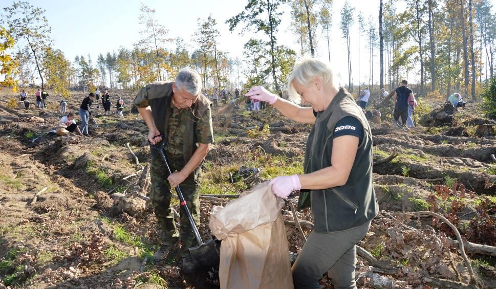 Film do artykułu: Niech zaszumi las. Ponad sto osób sadziło sosny na terenach dotkniętych nawałnicą