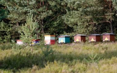 Za cicho w pasiekach. Pszczołom jest zimno!