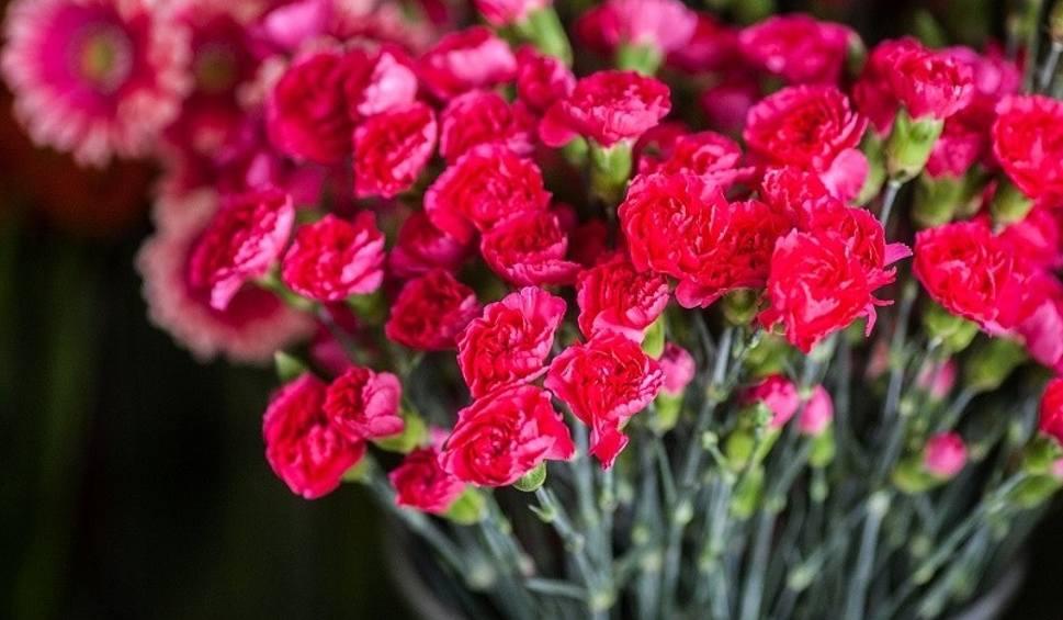 Film do artykułu: Najpiękniejsze życzenia dla babci Wyjątkowe wierszyki dla babci 21 stycznia złóż babci piękne życzenia