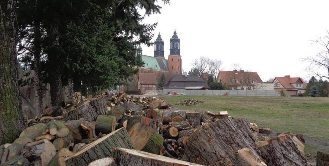 Ostatnio mieszkańców zbulwersowała m.in. wycinka drzew na Ostrowie Tumskim.