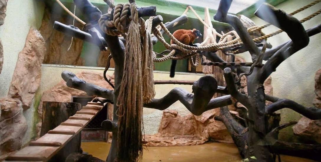 Nowa małpiarnia  w ogrodzie zoologicznym