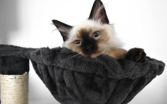 Koty to bardzo czyste zwierzęta. Jednak nie zwalnia to ich właścicieli z obowiązku czyszczenia ich legowisk, które są siedliskiem bakterii.