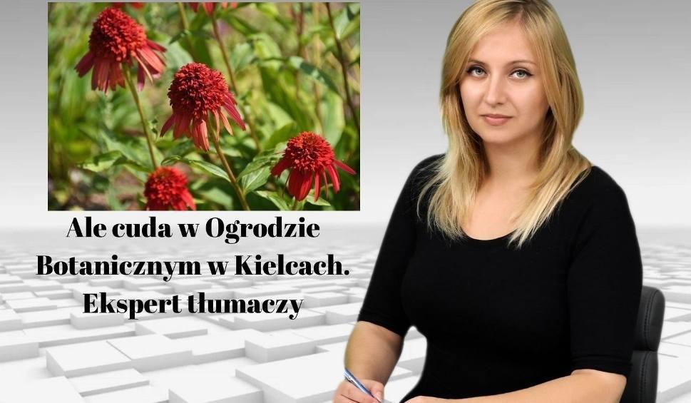 Film do artykułu: WIADOMOŚCI ECHA DNIA. Ale cuda w Ogrodzie Botanicznym w Kielcach. Ekspert tłumaczy