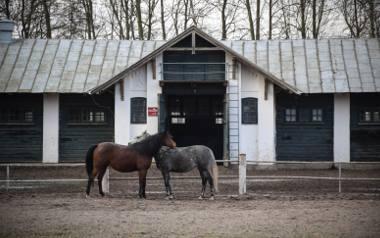 Konie z Pride of Poland znowu idą pod młotek