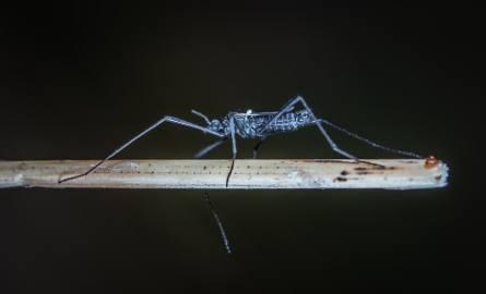 Komary atakują zwierzęta w świętokrzyskich gospodarstwach. Jakie rozwiązania?