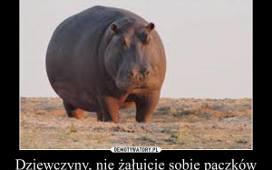 Tłusty Czwartek W Liczbach Ile Kosztują Pączki W Poznaniu Ile