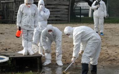 Ptasia grypa kosztuje nas miliony!