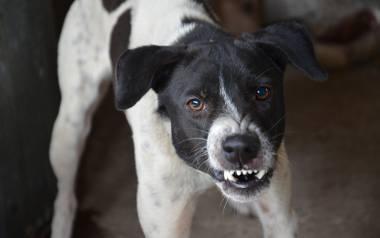 Badania zostały oparte na przypadkach urazów twarzy spowodowanych właśnie przez ugryzienie psa, z którymi zmagali się lekarze z Nationwide Children's