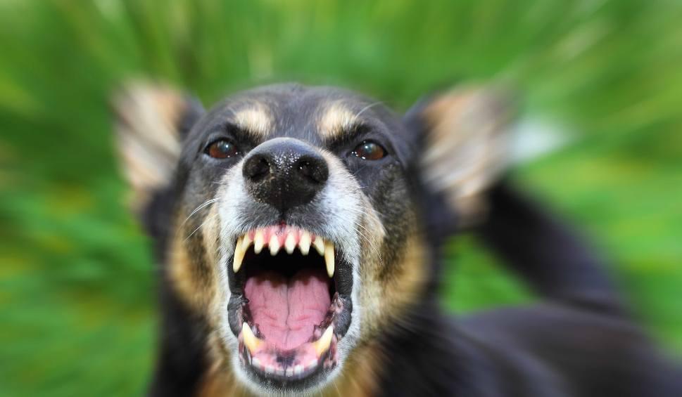 Film do artykułu: Uprzejmie donoszę, że Kowalski dręczy psa, czyli jak uprzykrzyć życie sąsiadowi