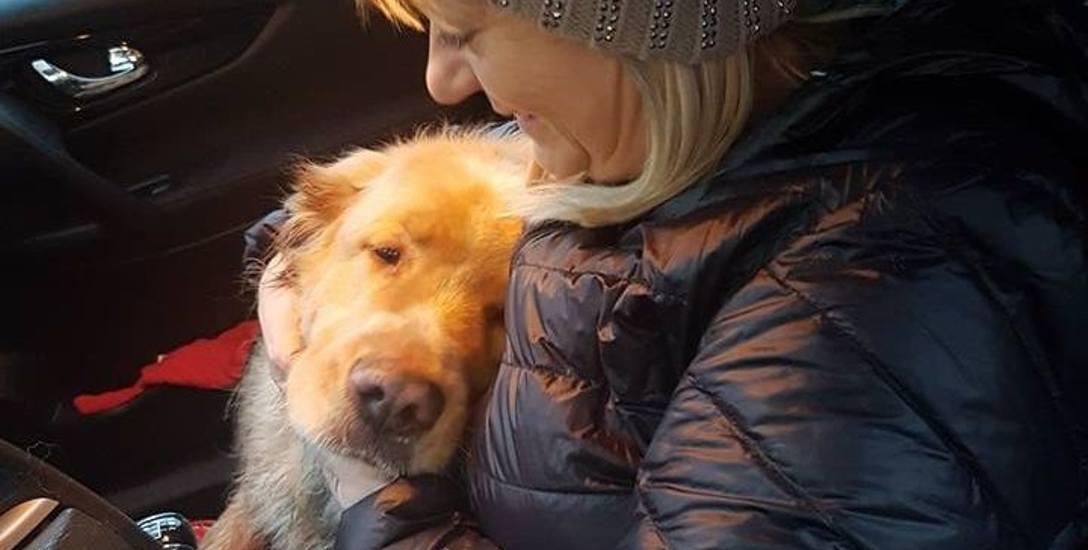 Ten pies zgubił się i błąkał  po ulicach. Gdy pani Iwona zawołała go do auta, okazał wdzięczność...