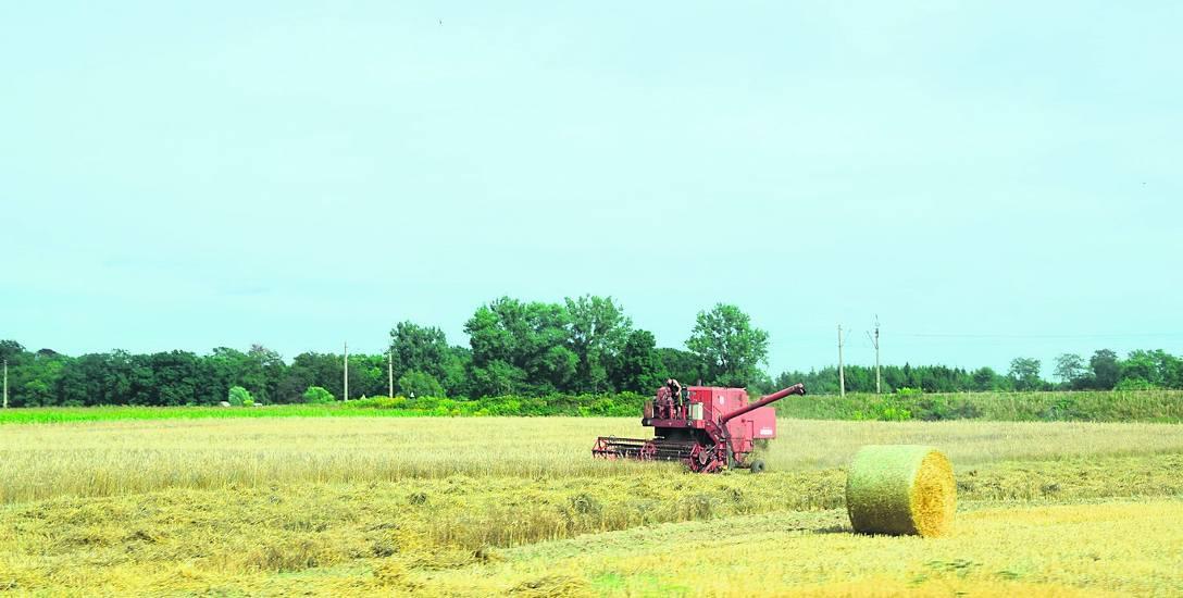 Rolnicy z powiatu stargardzkiego ucierpieli na skutek suszy
