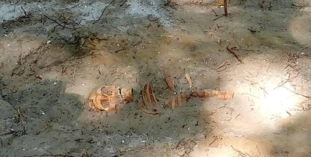 Szczątki zostały odnalezione w miejscu, w którym po zakończonych walkach Niemcy pogrzebali poległych polskich żołnierzy w zbiorowej mogile
