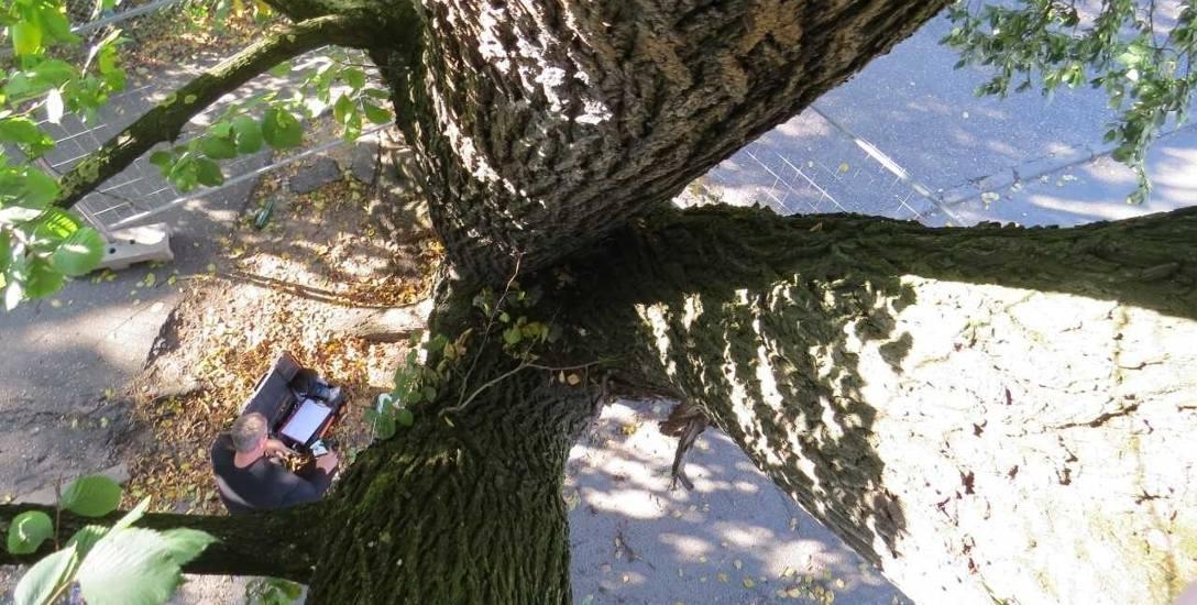 Arboryści to ludzie, którzy często siedzą, zawodowo, w koronach drzew. Badając drzewa, przede wszystkim bardzo uważnie je obserwują. Nazywani bywają