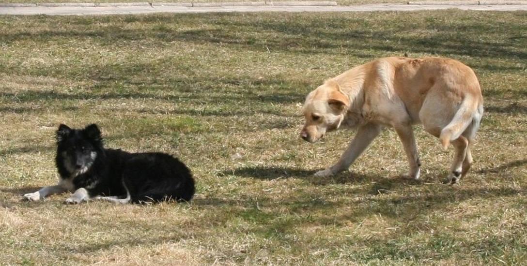 Dlaczego bezpańskie psy biegają sobie po ulicach Ostrowi?