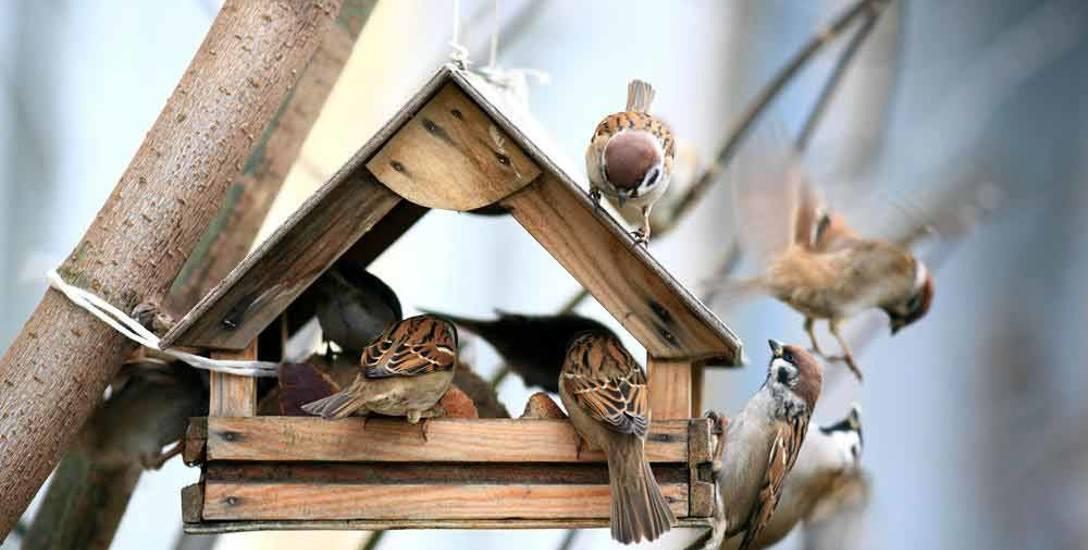 Jak pomóc ptakom przetrwać srogą zimę?