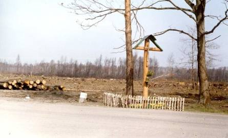 Podczas pożaru zdarzały się cuda. Ten krzyż nie spłonął, choć lasy wokół niego ogień strawił całkowicie.