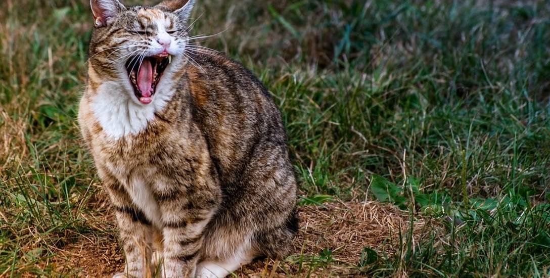 Kot to zwierzę o bardzo wrażliwej psychice, a przy tym, niestety, słabo sygnalizujące, że dzieje się z nim coś złego