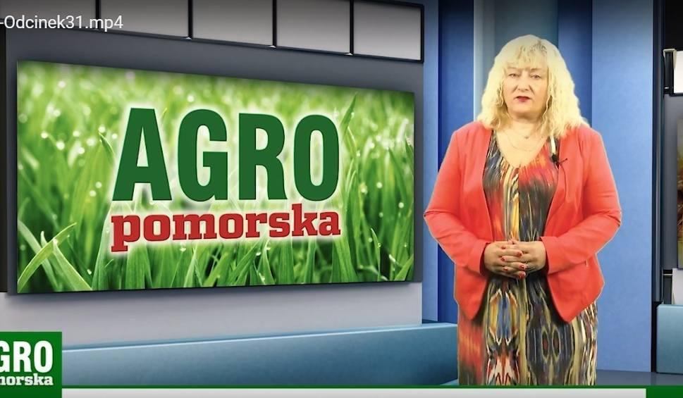 Film do artykułu: Kondycja upraw, e-wnioski o dopłaty - po terminie podstawowym. Agro Pomorska odcinek 31 [wideo]